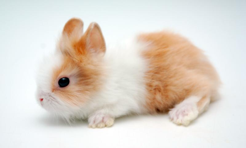 Guía de los conejos toy