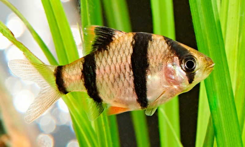 Guía de peces de agua fría