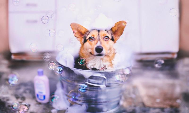 Higiene del perro