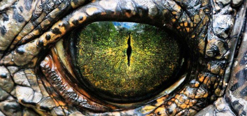 Historia y evolución de los cocodrilos