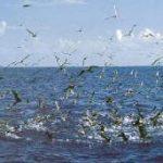 Fotos de pájaros