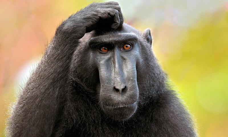 Imágenes de monos