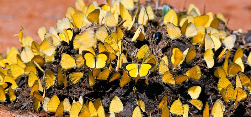 Importancia de las mariposas