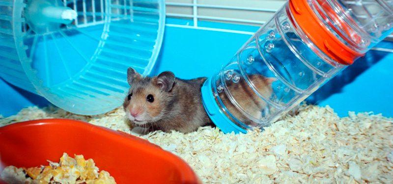 Resultado de imagen para hamster en su jaula