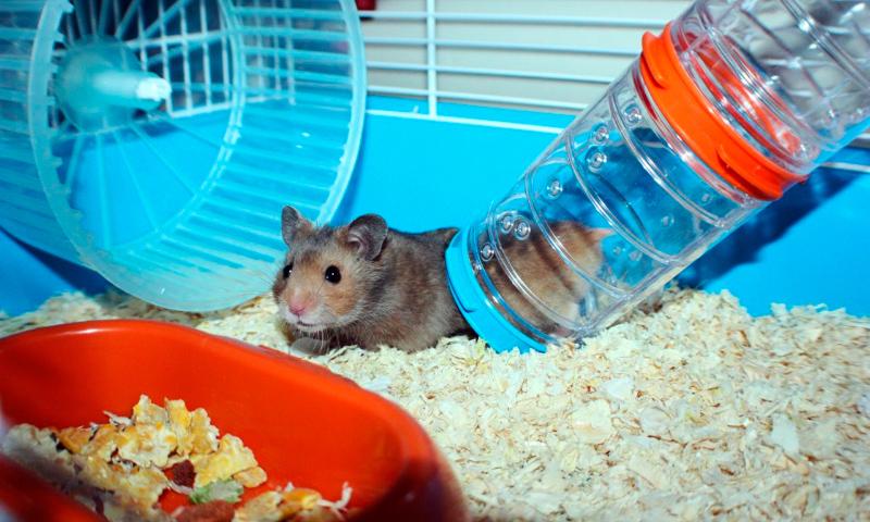 C mo elegir la jaula para tu hamster medidas de la jaula for Jaulas para cria de peces
