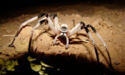 Arañas más grandes del mundo