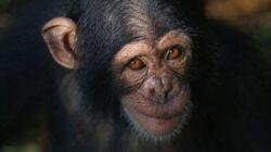 Las 5 enfermedades genéticas más comunes en los animales
