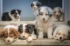 Las 7 mejores aspiradoras sin cables para perros y gatos