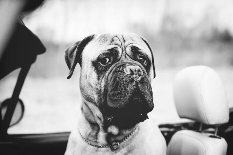 Las ultimas fotos de un perro