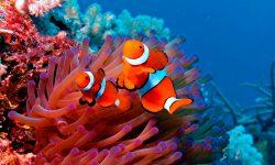 Los 10 peces más bonitos de agua salada