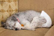Los 9 mejores pañales para perros