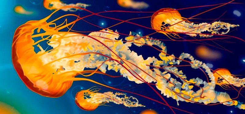 Medusas venenosas