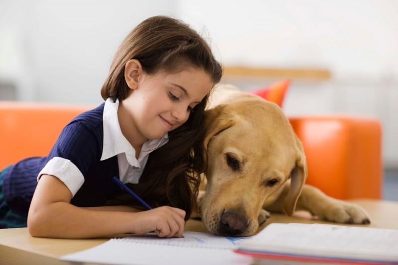 Las 7 mejores razas de perros para niños