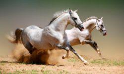 Mitos del caballo blanco
