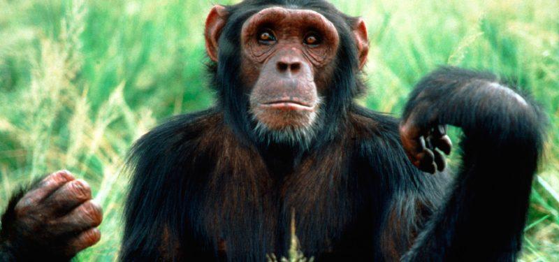 Mono Características Tipos De Monos Qué Comen Dónde