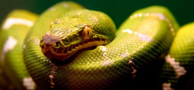Orígenes de las serpientes
