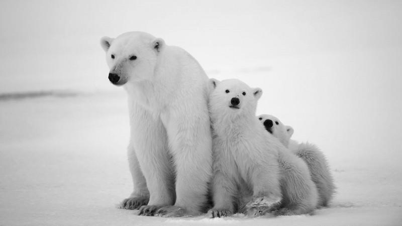 Fotos De Animales En Peligro De Extinción Imágenes