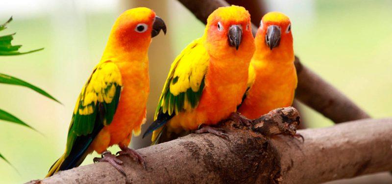 Pajaros Aves Tipos Y Nombres De Pajaros Explicados Uno Por Uno