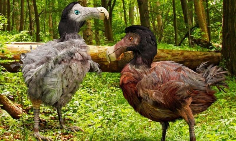 Pájaros dodo