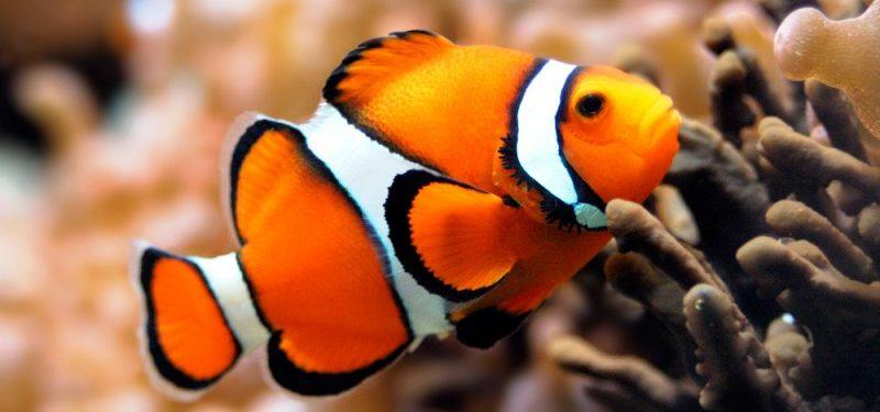 Peces caracter sticas tipos de peces qu comen d nde for Agua para peces
