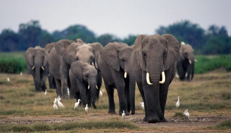Elefante Cuánto Pesan Dónde Viven Qué Comen Tipos De Elefantes