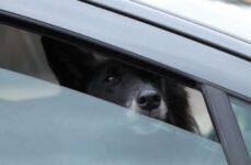 ¿Puedo reclamar una indemnización por el atropello de mi perro?