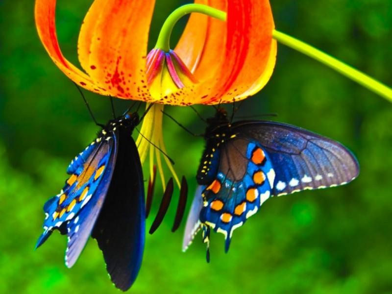 Mariposa | Anipedia