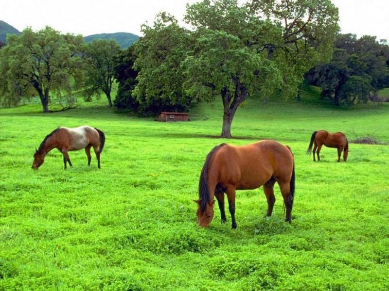 Qué comen los caballos
