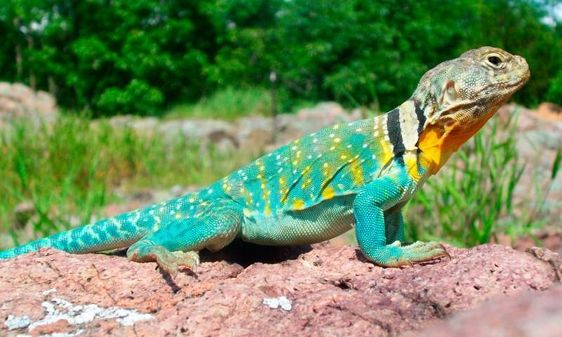 Los lagartos