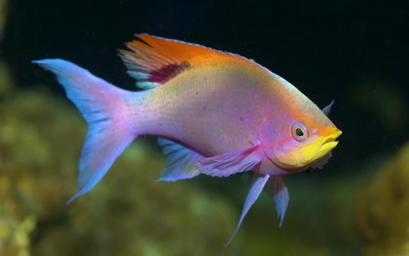 Peces caracter sticas tipos de peces qu comen d nde for Peces alimentacion