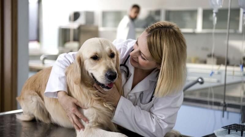 Qué necesitas para que tu clínica veterinaria esté en Internet