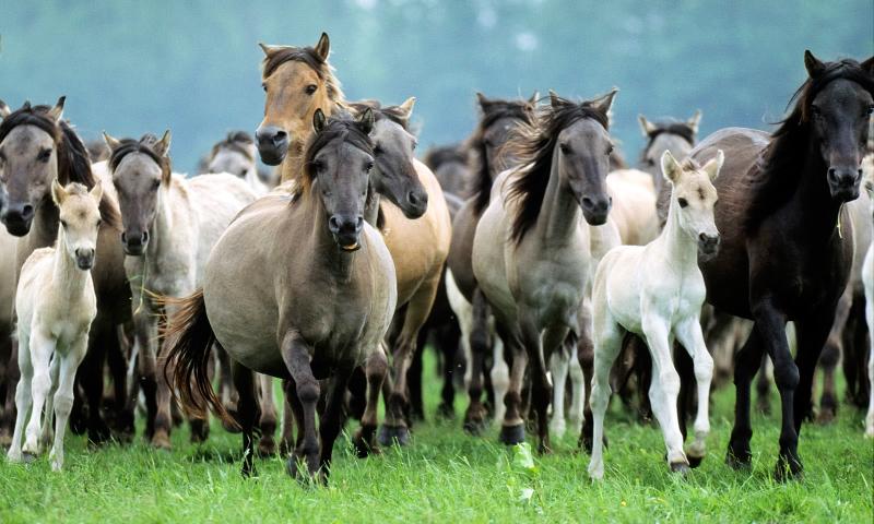 Frases y refranes sobre caballos Cules son los mejores refranes