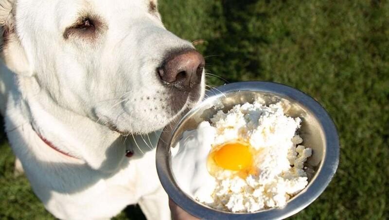 Recetas caseras para perros: claves para una dieta equilibrada