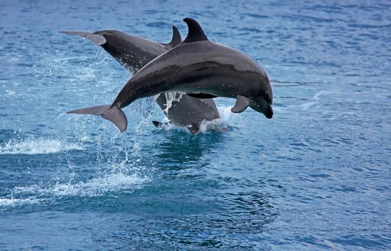 Cómo se reproducen los delfines