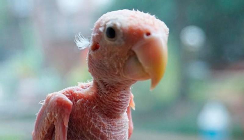 Rhea, el pájaro sin plumas