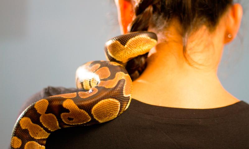 Las serpientes como mascotas