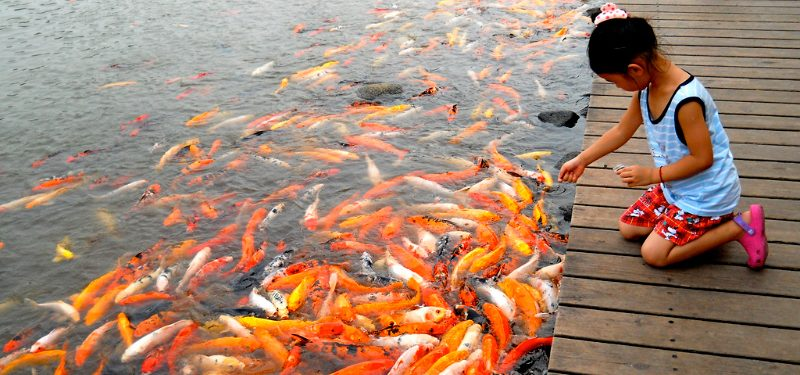 Sistema digestivo de los peces
