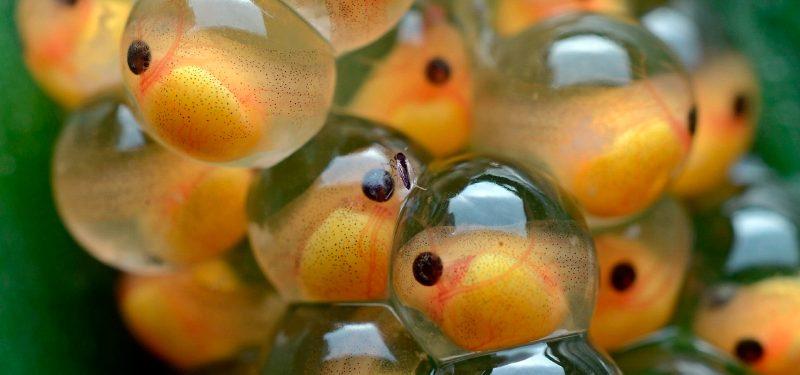 Sistema reproductor de los peces