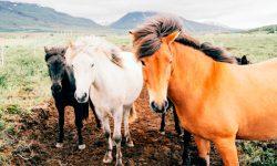 Taxonomía de los caballos