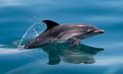 Taxonomía de los delfines