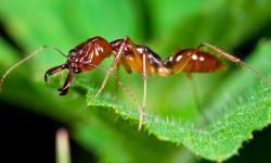 Taxonomía de las hormigas
