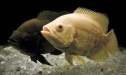 Taxonomía de los peces