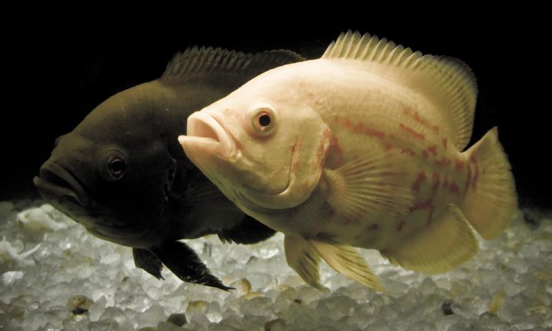 Da mala suerte tener peces en casa cheap principales - Los peces traen mala suerte ...