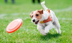 Taxonomía de los perros