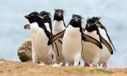 Taxonomía de los pingüinos