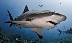 Taxonomía de los tiburones