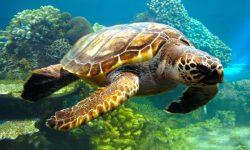Taxonomía de las tortugas