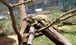 Terrarios de iguanas