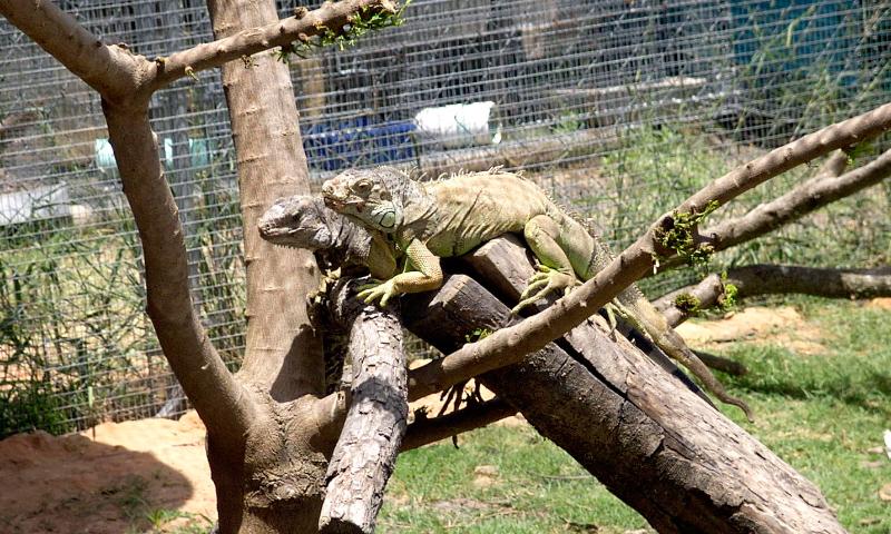 Guía sobre el terrario de tu iguana - Consejos para su ...