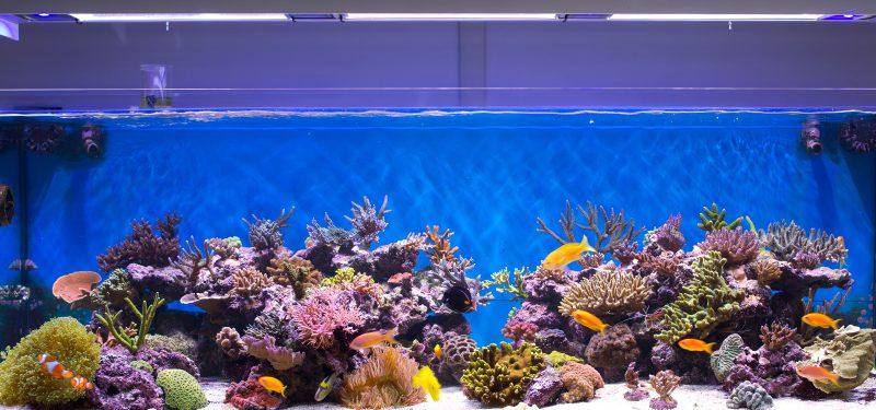 Acuarios para peces agua salada dulce c lida fr a for Clases de peces de acuario